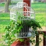 Birdcage Greeting Card Holder