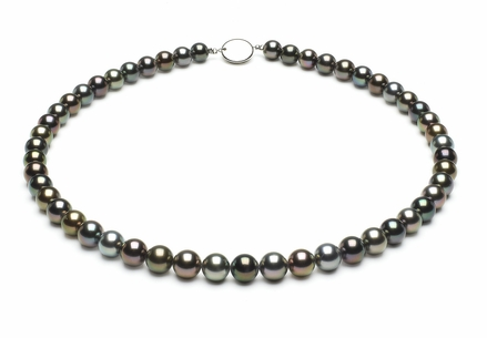 Tahitian Pearl Necklace Serial Number   7-3mmto8-6mm-tahitian-south-sea-multi-color-pearl-necklace-aaa-16inch-s5-xr05138m-b99