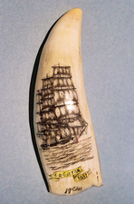 "Scrimshaw Sperm Whale's Tooth ""E.B. Sutton - 1881"" Gallery Display"