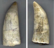 "Sperm Whale Tooth""Tow Over the Columbia River Bars""Gallery Display"