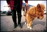 Blind find a new aid: SEEING-EYE HORSES- 1/21/01-