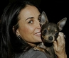 Demi Moore and new dog Vida Blue.