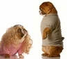 Dog Clothing and Apparel