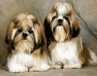 <B>Doggy beauty school - grooming tips  </B>