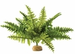 Exo-Terra Boston Fern Terrarium Plant, Medium