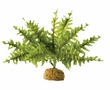 Exo-Terra Boston Fern Terrarium Plant, Small