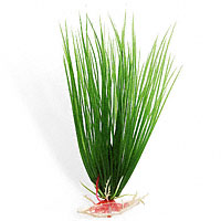 Hairgrass 5