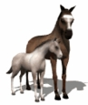<B><U>Horse / Cattle and Livestock</B></U>