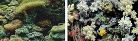 "Marina Aqua Decor Background Marine Reef and Coral double sided 12""x 24"""