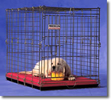 Precision Pets 'Suitcase' Fold n Carry Folding Travel Dog Crate - Gold