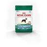 Royal Canin Mini Dental Hygiene (24) Formula Dry Dog Food 3 Lb Bag