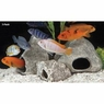 Underwater Galleries Ornament Cichlid Stone Round Small