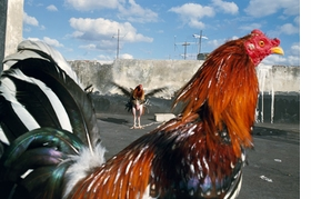 """""""Havana"""" (2008), by Rebecca Norris Webb, is reproduced from <I>Alex Webb and Rebecca Norris Webb on Street Photography and the Poetic Image</I>."""