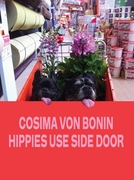 Cosima von Bonin: Hippies Use Side Door