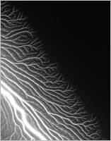 Hiroshi Sugimoto: The Long Never, Lightning Fields 304