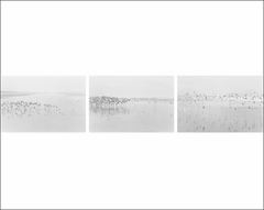 Robert Adams: Light Balances / On Any Given Day in Spring