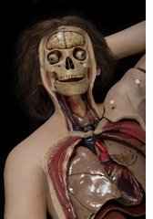 The Anatomical Venus: Wax, God, Death & the Ecstatic