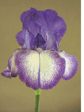 "Featured images, ""Bearded iris hybrid 346"" (2004), is reproduced from <i>Vital Beauty</I>. The editors write, ""George Gessert has been breeding hybrids of bearded irises, Pacifica irises, Oriental poppies, California poppies, corn poppies and streptocarpuses for decades as a form of bio art. In this book, he has permitted us to use his photographs of some of his most beautiful cultivars."""