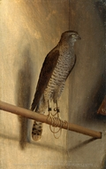 A Sparrowhawk painting reproduction, Jacopo De Barbari