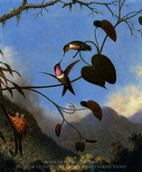 Amethyst Woodstar painting reproduction, Martin Johnson Heade