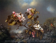 Apple Blossoms and Hummingbird painting reproduction, Martin Johnson Heade