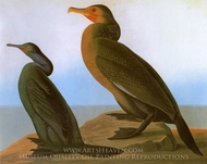 Brandts Cormorant painting reproduction, John James Audubon