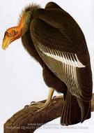 California Condor by John James Audubon