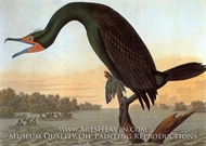 Double Crested Cormorant by John James Audubon