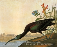 Glossy Ibis by John James Audubon
