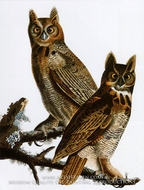Great Horned Owl by John James Audubon