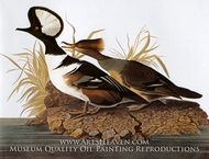 Hooded Merganser by John James Audubon