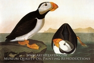 Horned Puffin by John James Audubon