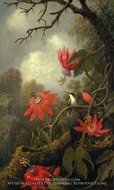 Hummingbird and Passionflowers by Martin Johnson Heade