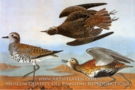 Lesser Golden Plover by John James Audubon