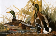 Mallard Ducks by John James Audubon
