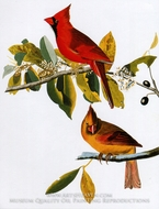 Northern Cardinal by John James Audubon