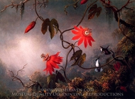 Passion Flowers and Hummingbirds painting reproduction, Martin Johnson Heade