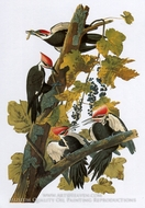 Pileated Woodpecker by John James Audubon