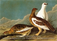 Ptarmigan by John James Audubon