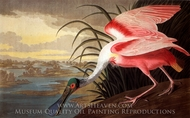 Roseate Spoonbill painting reproduction, John James Audubon