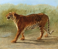Royal tiger Marching painting reproduction, Rosa Bonheur