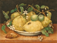 Still Life with Bowl of Citrons painting reproduction, Giovanna Garzoni