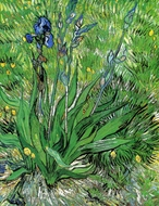 The Iris painting reproduction, Vincent Van Gogh
