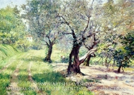 The Olive Grove by William Merritt Chase