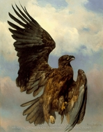 The Wounded Eagle painting reproduction, Rosa Bonheur