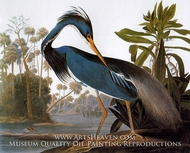 Tricolor Heron by John James Audubon
