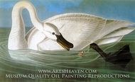 Trumpted Swan by John James Audubon