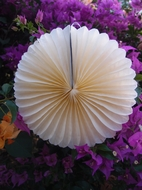 "BLOWOUT 12"" Beige / Ivory Tissue Paper Flower Rosette Fan Decoration (6 PACK)"