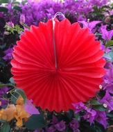 "BLOWOUT 8"" Red Tissue Paper Flower Rosette Fan Decoration (6 PACK)"