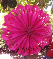 "BLOWOUT 16"" Fuchsia Pinwheel Paper Flower Decoration - (3 PACK)"